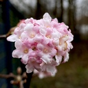 #vinterday #flower
